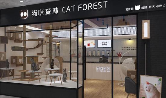 猫咪森林约久久客会员管理系统